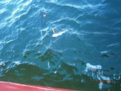 P9072068 wędkarstwo morskie