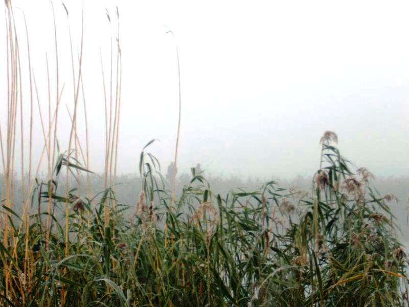 wędkarze We mgle