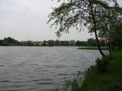 Rutki W Płońsku