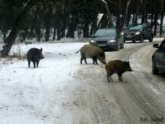 Blokada drogi ;)