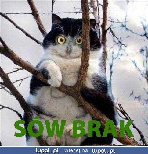 sow_brak.jpg